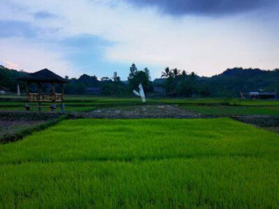harmoni farmville hijau